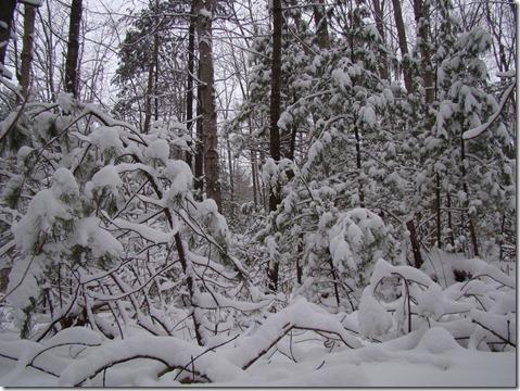 blizzard00002